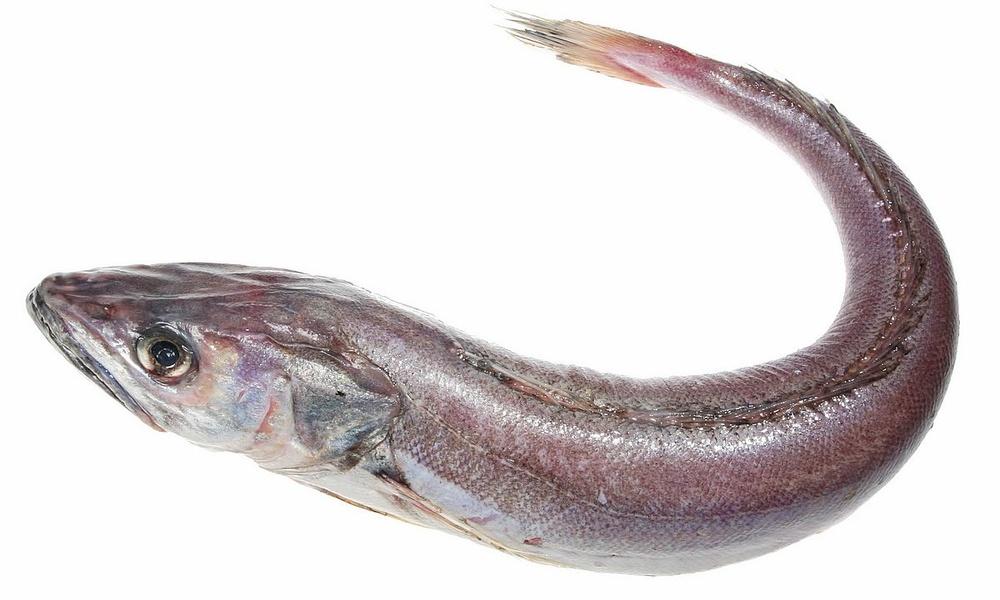 Хоки (аргентинский макруронус)